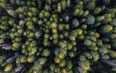 L'importanza delle foreste