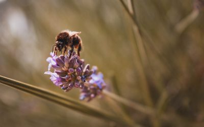 Bees, flowers and intensive agriculture